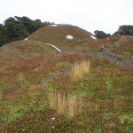 green roof July 2009 188